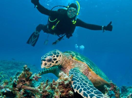 Timanfaya Reef